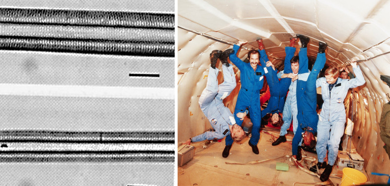 Слева: нормальные (вверху) и атрофированные волокна мышц. Справа: тренировка космонавтов