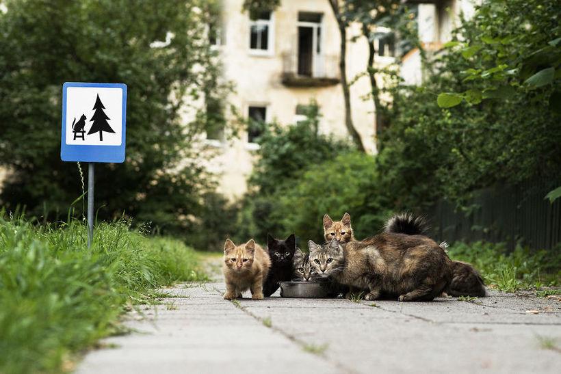 Дорожные знаки для животных в Вильнюсе
