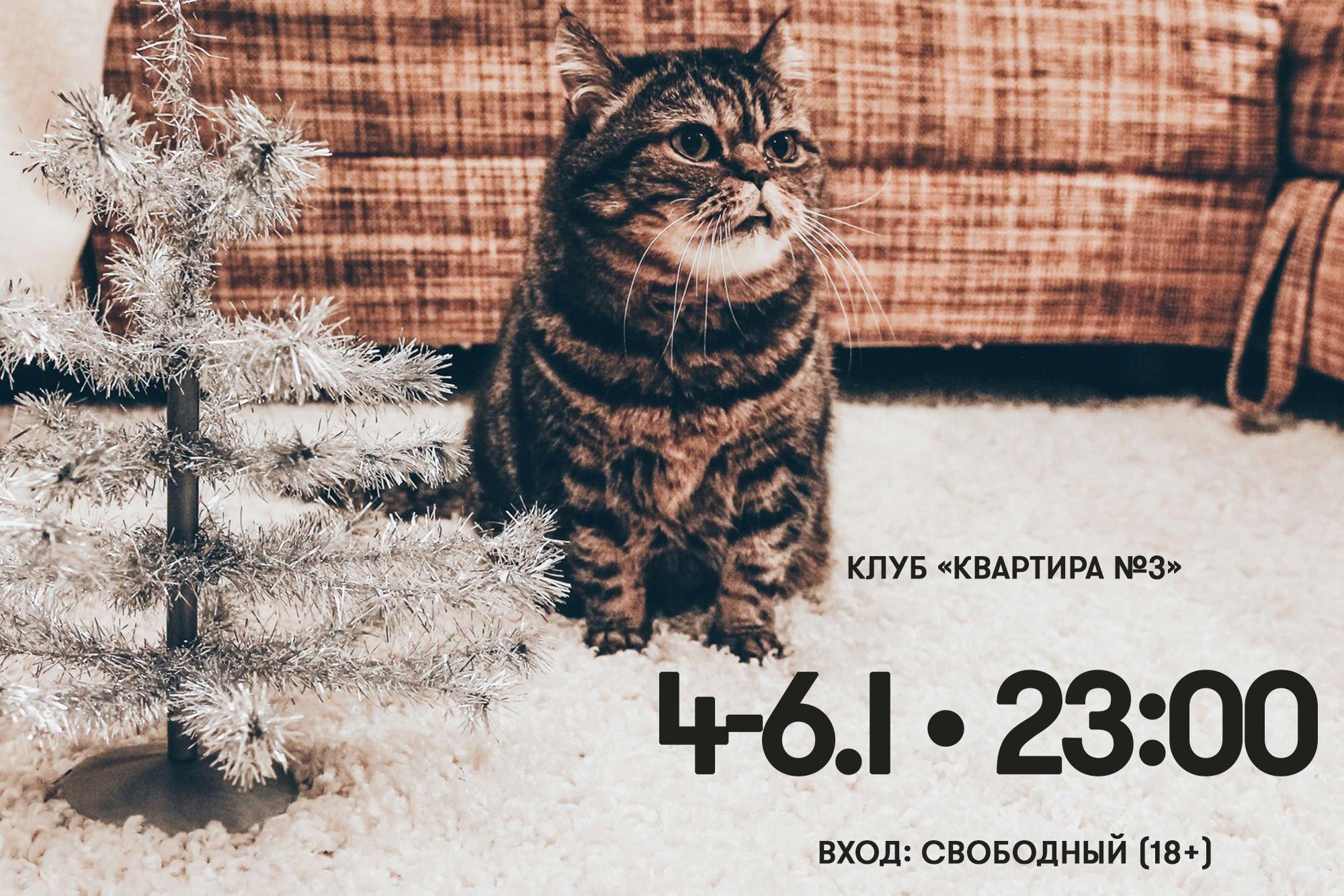 Самый матёрый редакционный кот Бостон