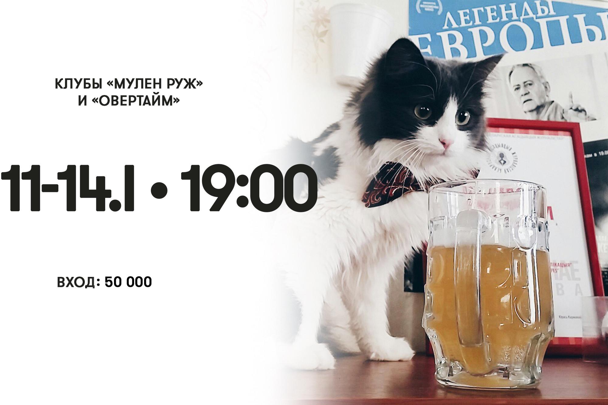 Кошка Маланка демонстрирует, как нужно вести себя на «МозгоБойне»