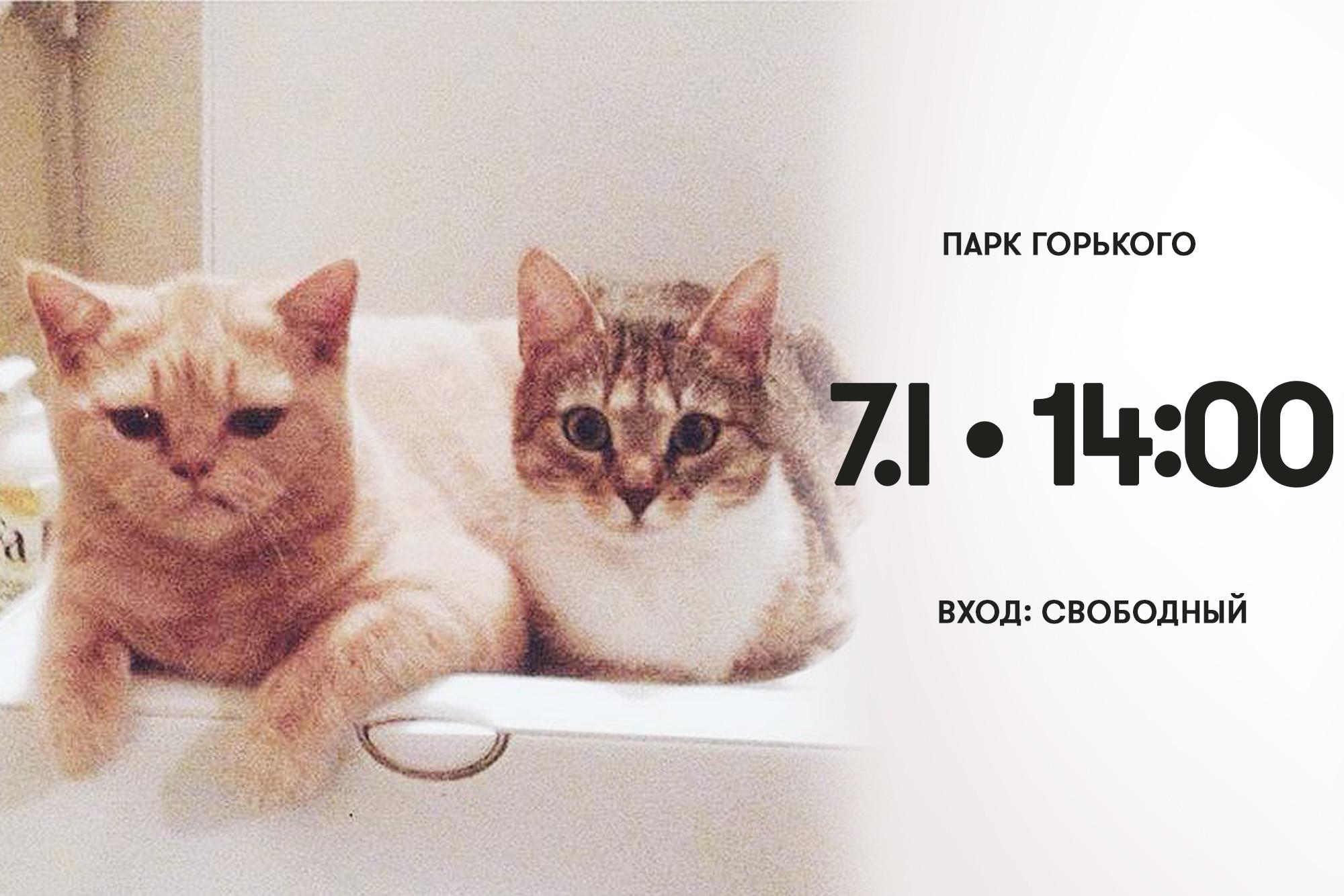 Анонсируют семейное событие кошки Персифона и Кассиопея