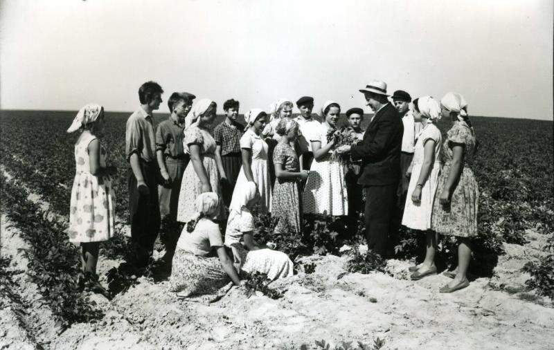 Березковская средняя школа. Занятие на картофельном поле, первая половина 1960-х