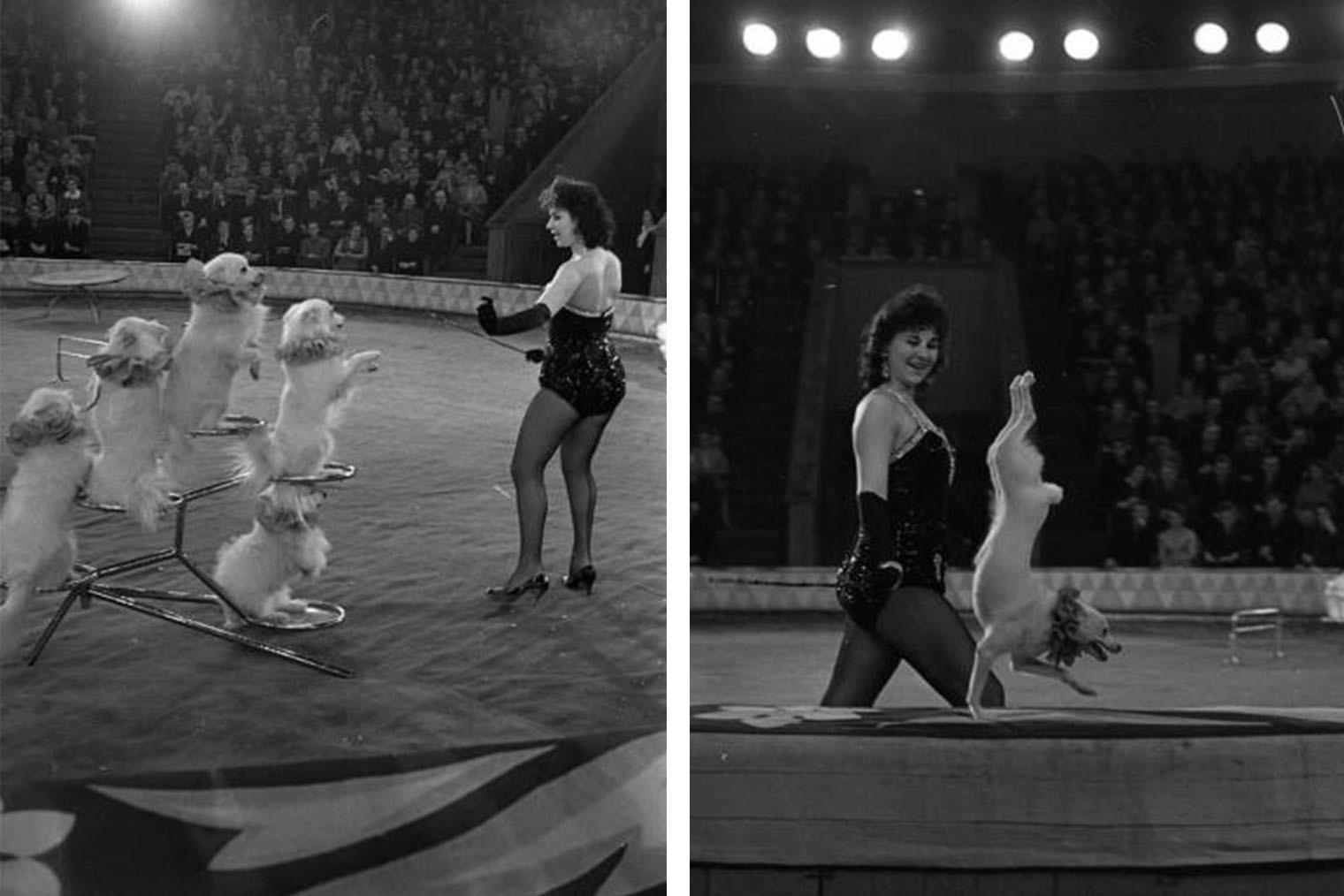 Дрессировщица собак Ирина Авьерино в минском цирке, вторая половина 1960-х. Фото: Семен Мишин-Моргенштерн