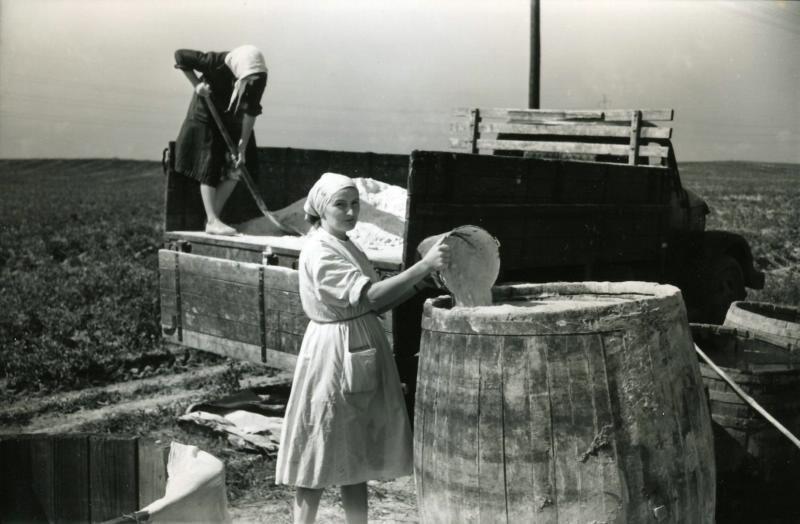 Подготовка удобрений в Лошице, тогда ещё под Минском, 1960-е