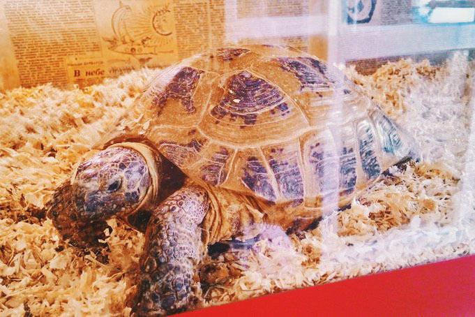 Черепаха в хостеле «Революсьён»