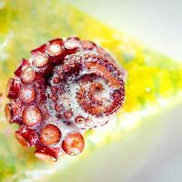Thumb bisato octopus pasta 1 lr