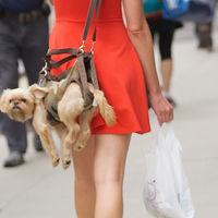 Thumb o puppy purse facebook