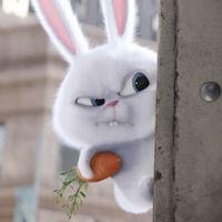 Thumb the secret life of pets rabbit angry wallpaper